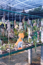 Exhibition of Native Orchids, Orchid Exhibition at Orchid Garden Khao Lak, Thailand